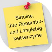 SIRTUINE, IHRE REPARATUR- UND LANGLEBIGKEITSENZYME